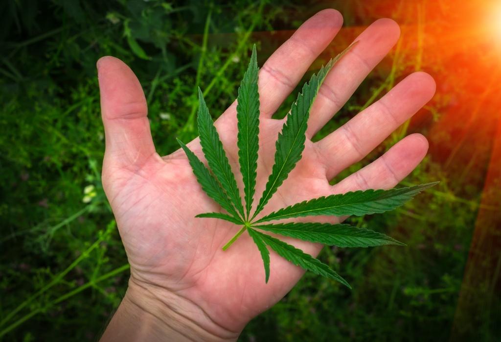 Что такое марихуана
